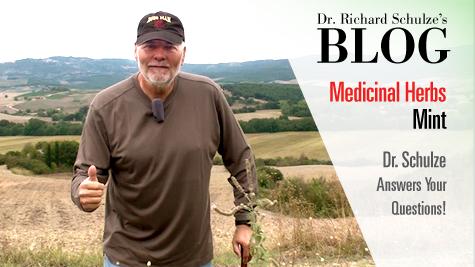 Medicinal Herbs: Mint